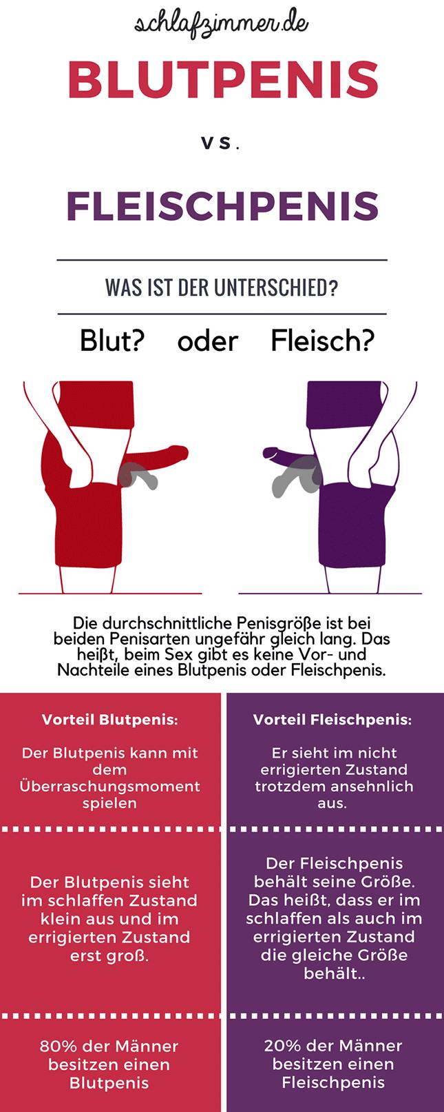 Unterschied zwischen Fleischpenis und Blutpenis Infografik